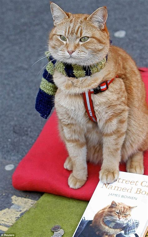 How Bob the cat sparked affair between a 56-year-old