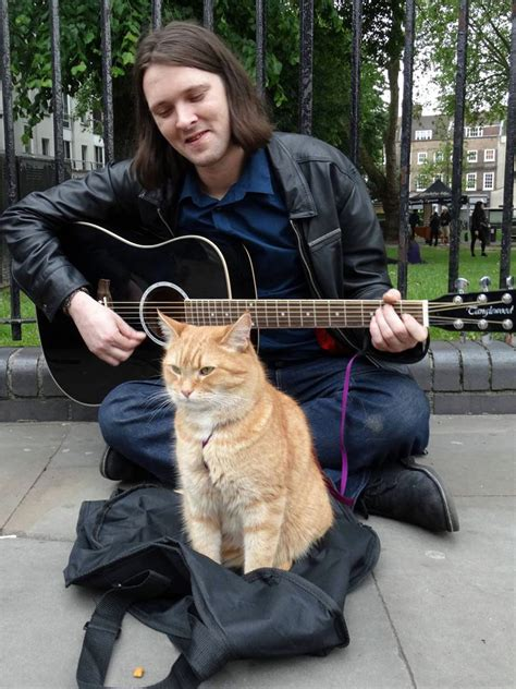 How a feral cat helped a homeless man turn his life around