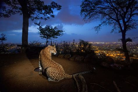 People and Wildlife in India | National Geographic Society
